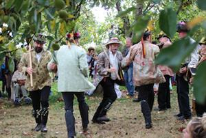 Morris dancing in a Much Marcle  orchard